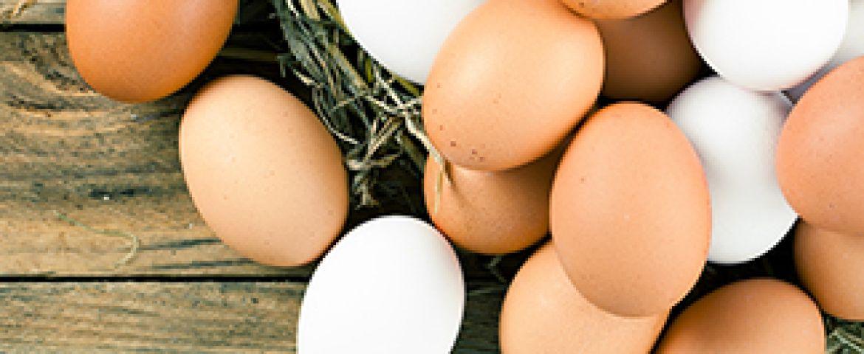 Yumurta Hakkında Bilinmesi Gerekenler!